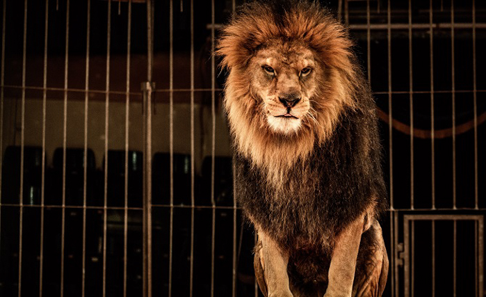 Hawaii To Become The First US State To Ban Wild Animals From Performing 2_netherlands-ban-circus-animals