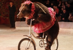 Hawaii To Become The First US State To Ban Wild Animals From Performing Beartutu-400x278