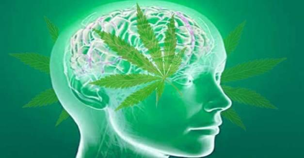 marijuana-jea;s-the-brain