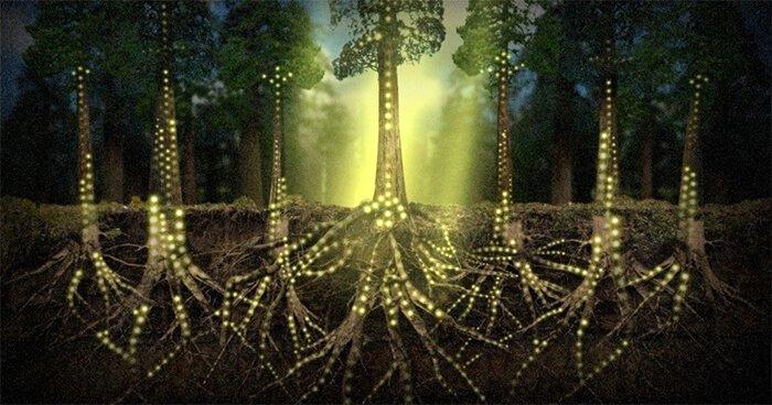 Plants Communicate Using an Internet of Fungi