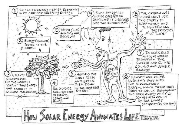 solar-animating-life
