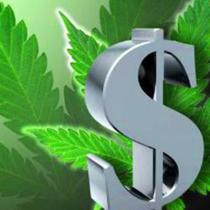 marijuana-money-live-trading-news-210x2101