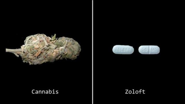 marijuana-pills-zoloft-5
