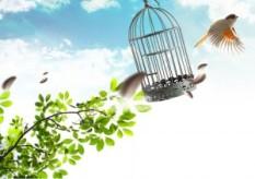 revolution of freedom bird cage