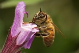 killing bees