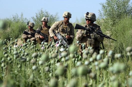 2326a-us-marines-opium-field