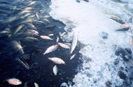 Fish Deaths - Public Domain