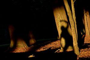 mind virus wetiko shadow exist