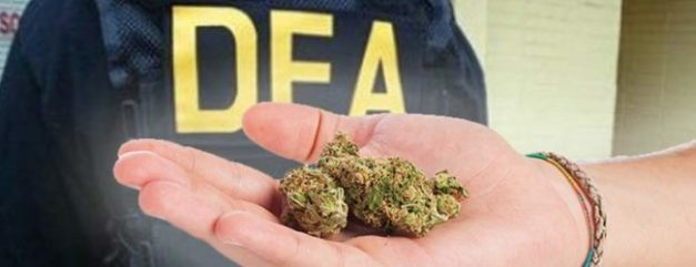 New Report Reveals DEA Deliberately Blocked Scientific Research on Marijuana For 40 Years