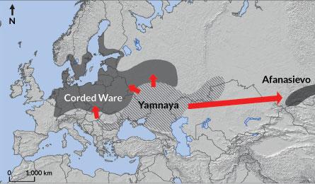 yamnaya migration