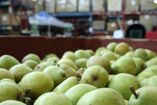 Pears at the Greater Vancouver Food Bank's sorting facility.
