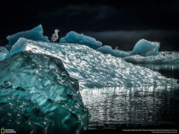 20+ Of The Best Entries From The 2016 National Geographic Nature Photographer Of The Year - Icescape
