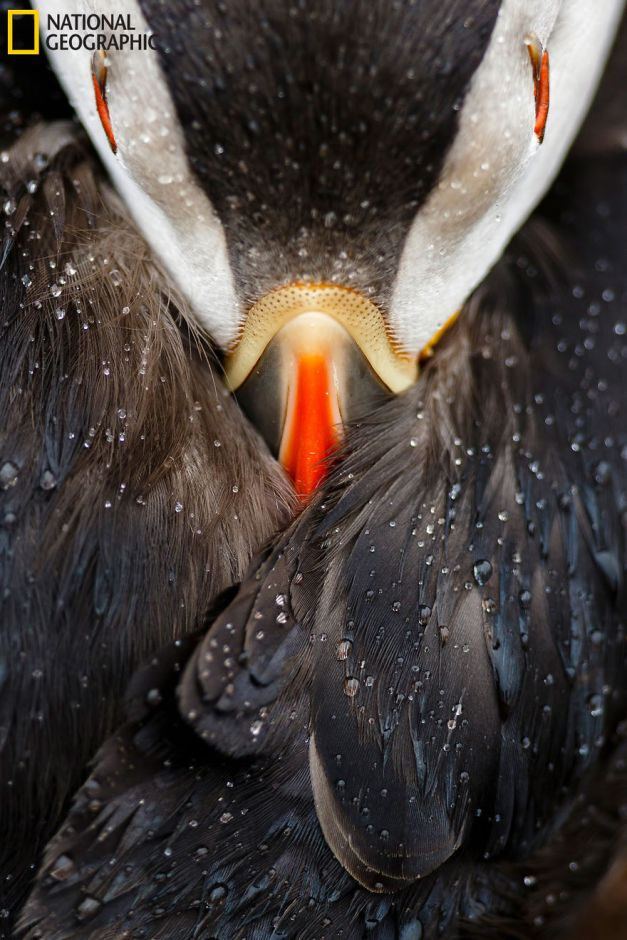 20+ Of The Best Entries From The 2016 National Geographic Nature Photographer Of The Year - Puffin Studio