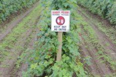 spray pesticide fungicide