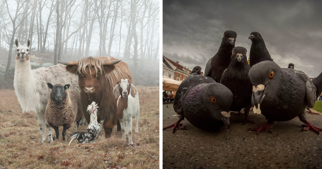 32 Animals That Look Like They're About To Drop The Hottest Albums Of The Year