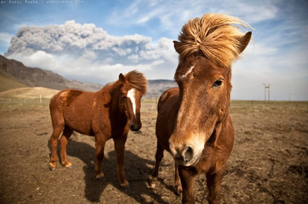 32 Animals That Look Like They're About To Drop The Hottest Albums Of The Year - The 80s Duo Horse Pop Band From Iceland