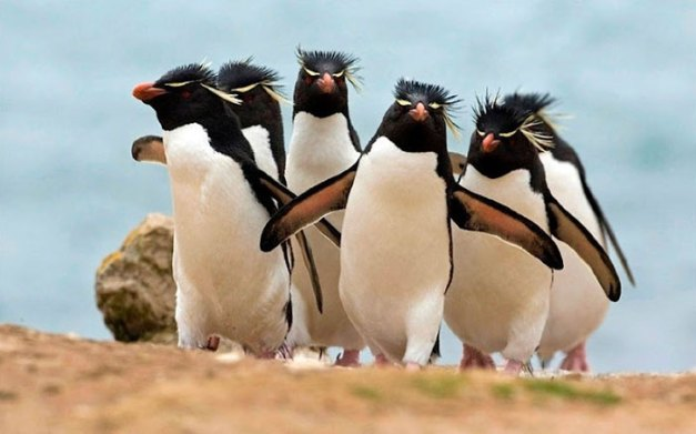 32 Animals That Look Like They're About To Drop The Hottest Albums Of The Year - The Electronic Rock Penguins