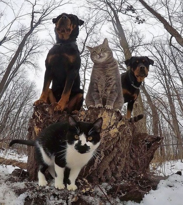 32 Animals That Look Like They're About To Drop The Hottest Albums Of The Year - The Meow-Tang Clan Pose For Their Debut Rap Album