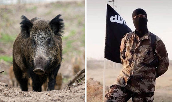 Boars eat ISIS