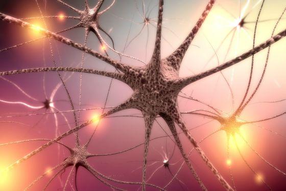 Brain. 3D. Neurons