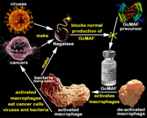 never take a vaccine nagalese gcmaf