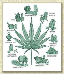 hemp-uses
