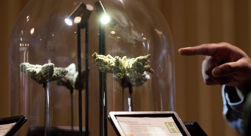 A shopper examines a cannabis display , in San Francisco during California's first day of recreational marijuana sales on Saturday, Jan. 6, 2018.