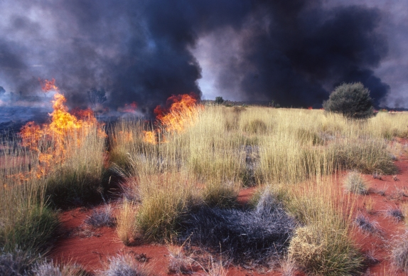 Image result for bush fires