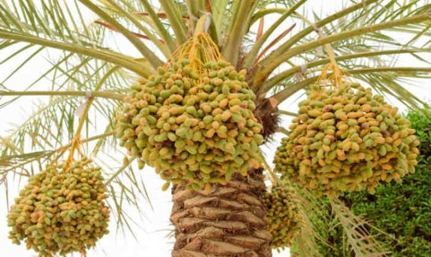 foodsgrow-date-tree