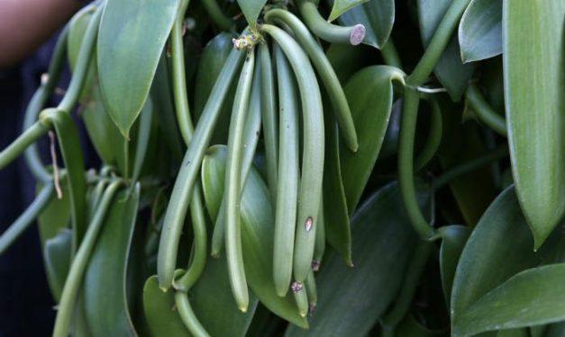 foodsgrow-vanilla