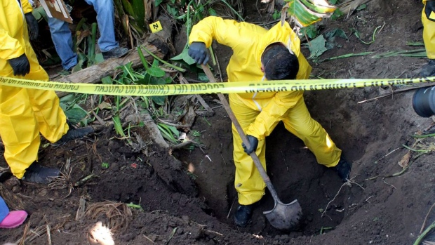 In this Jan. 15, 2018 photo, a man digs up a clandestine grave in Xalisco, Nayarit state, Mexico. Sniffer dogs led authorities to the grisly discovery of three clandestine graves containing at least 33 bodies in a sugarcane field. Some of the bodies may have been hacked up before being tossed into the pits, and authorities believe they were probably involved in the drug trade.