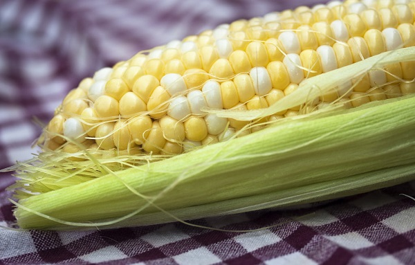 monsanto roundup corn