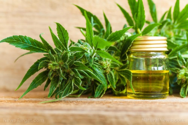 Image: CBD Bombshell: Cannabis approved by the FDA for treatment of brain and spinal cord glioma cancer tumors