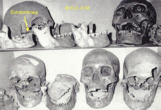 Skulls at Humbolt Museum