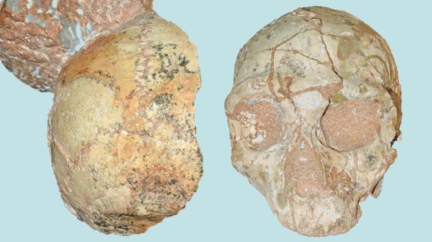 Apidima 1 (left) is a modern human; Apidima 2 (right) is a Neanderthal.
