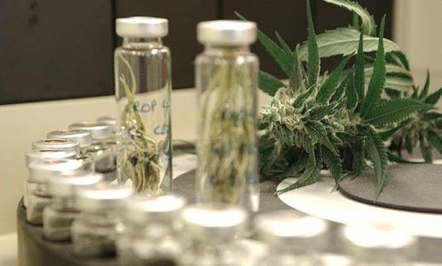 Cannabis, Heart Health, THC, CBD, Medicine
